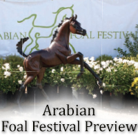 Arabian Foal Festival Preview