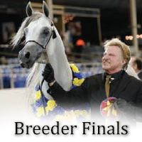 Breeder Finals Preview
